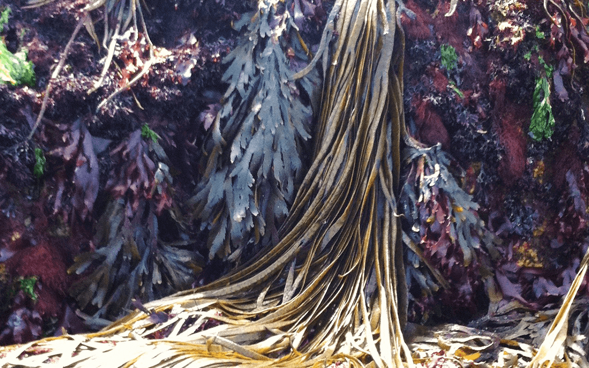 <span>Seaweeds and miscellaneous</span>